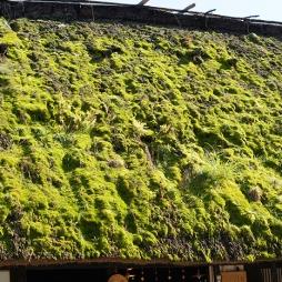 Rooftop in Takayama