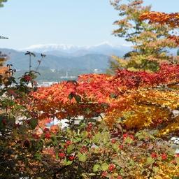 Japan autumn colours