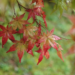 Autumn colours in Japan