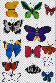 kat-illustrates-butterflies