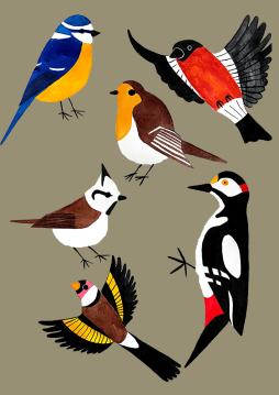 kat-illustrates-museum-posters-birds (0)