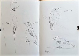 Museum Posters: Sketchbook - birds