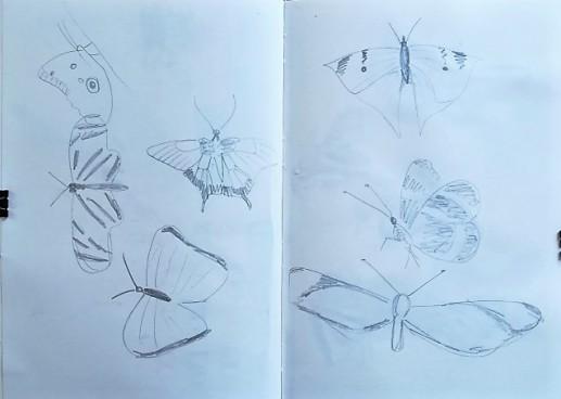 Museum Posters: Sketchbook - butterflies