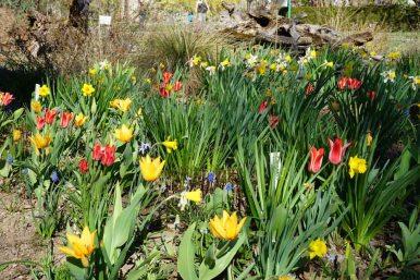 Munich Botanical Garden - blooming flowers