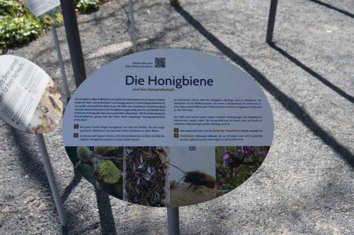 Munich Botanical Garden - honey bees